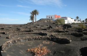 Cultivo de viñas en Lanzarote (Imagen: J.Cazorla)