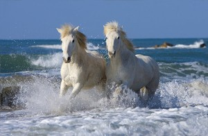 caballos gemelos