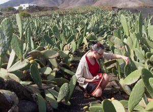 Anna Champeney visita Lanzarote