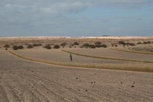 Agricultor en El Jable. Lanzarote (Imagen: JCazorla2013)