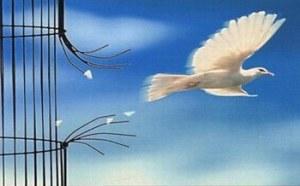 romper a volar paloma