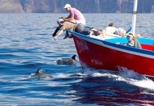 whale watching, avistamiento de cetáceos
