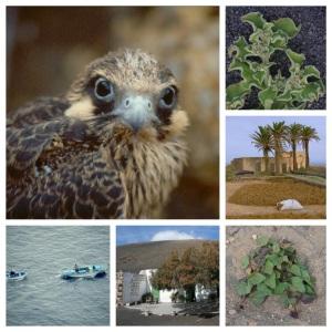 Recursos para un turismo de naturaleza y biodiversidad Lanzarote