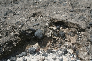 Yacimiento paleontológico en el norte de Lanzarote (Imagen: JCG2014)