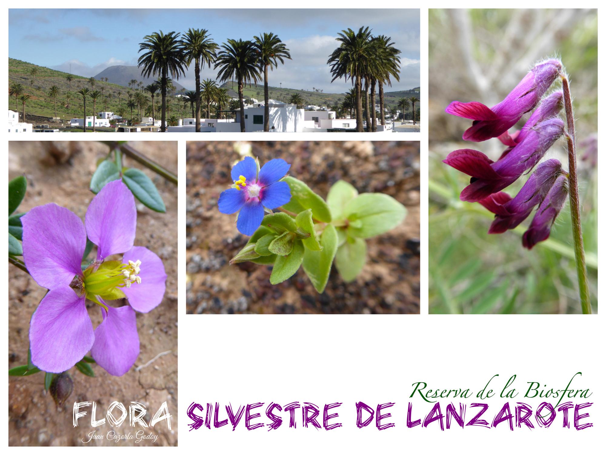flora  Sinergia Insular