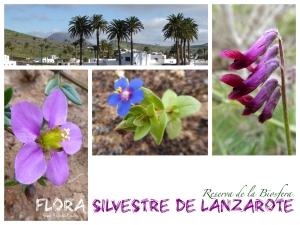 Flora silvestre de Lanzarote