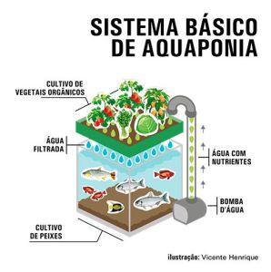 Sistema básico de Acuaponía